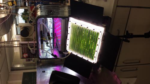 Photobioreactor del Instituto de Estudios Espaciales de la Universidad de Stuttgart  para cultivar chlorella vulgaris