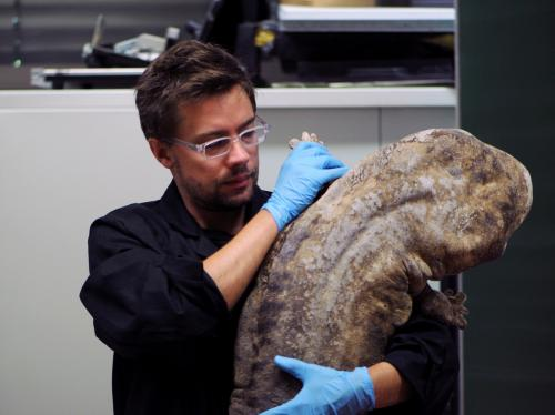 El investigador Egon Heiss con un ejemplar de salamandra gigante de la China